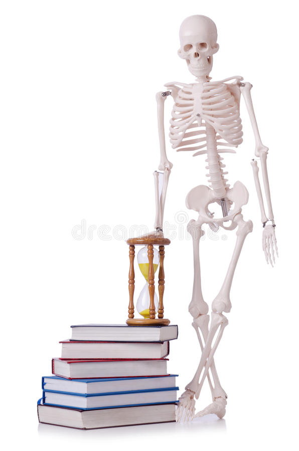 Skeleton reading books stock images