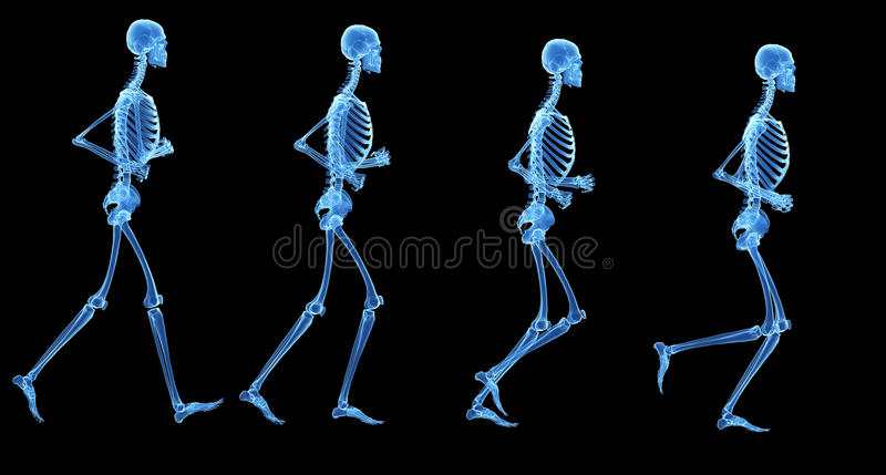 The skeleton royalty free illustration