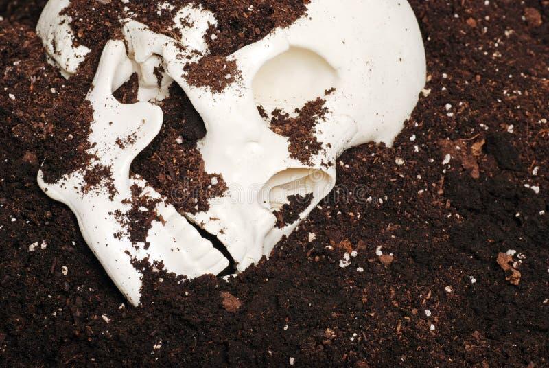 Skeleton Schädel im Schmutz lizenzfreie stockfotos