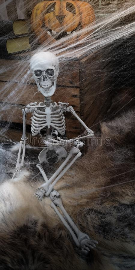 Skeleton sitting on fur rug, with Halloween pumpkin behind and stack of black-bound books on wooden box,covered with web stock images