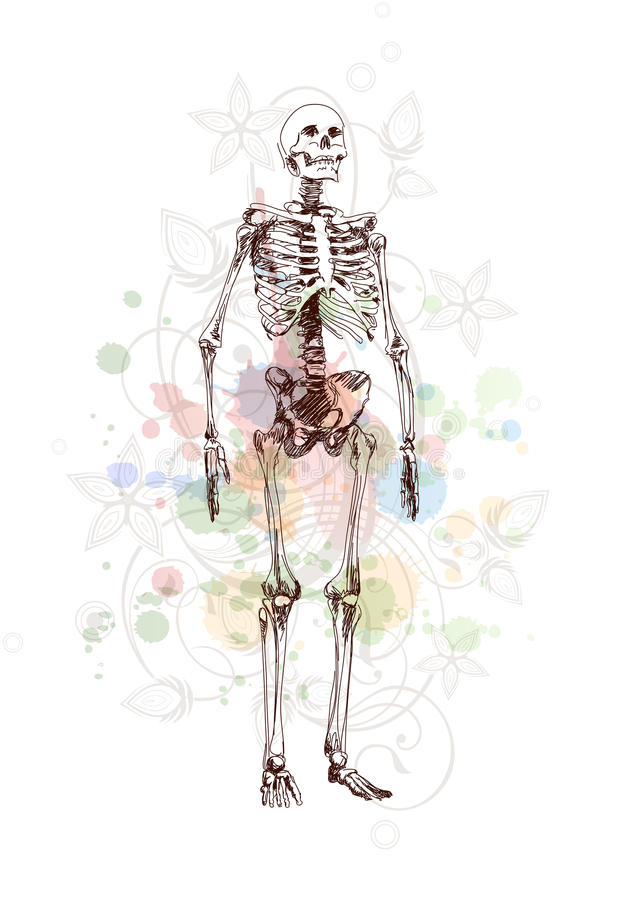 Download Skeleton Sketch & Floral Calligraphy Ornament Stock Vector - Image: 18087202
