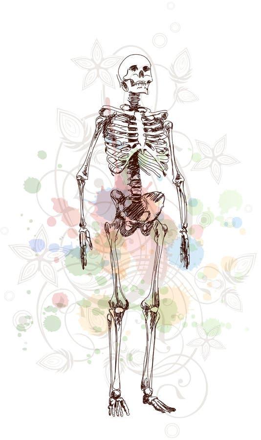 Skeleton sketch & floral calligraphy ornament stock illustration
