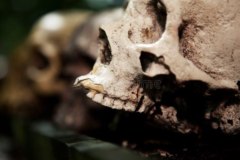 Skeleton skull sacrifice death. Skeleton skull human sacrifice creepy dead person cranium royalty free stock photos