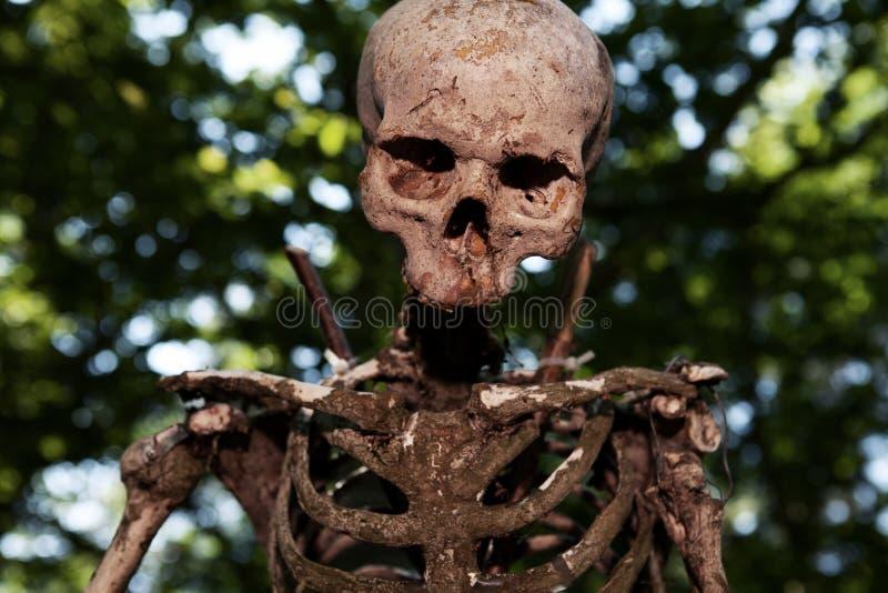 Skeleton skull sacrifice death. Skeleton skull on stake, human sacrifice in jungle. creepy dead person royalty free stock photo