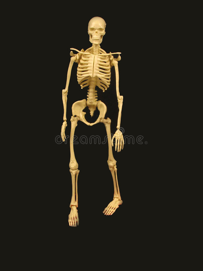 Skeleton without stand royalty free stock image