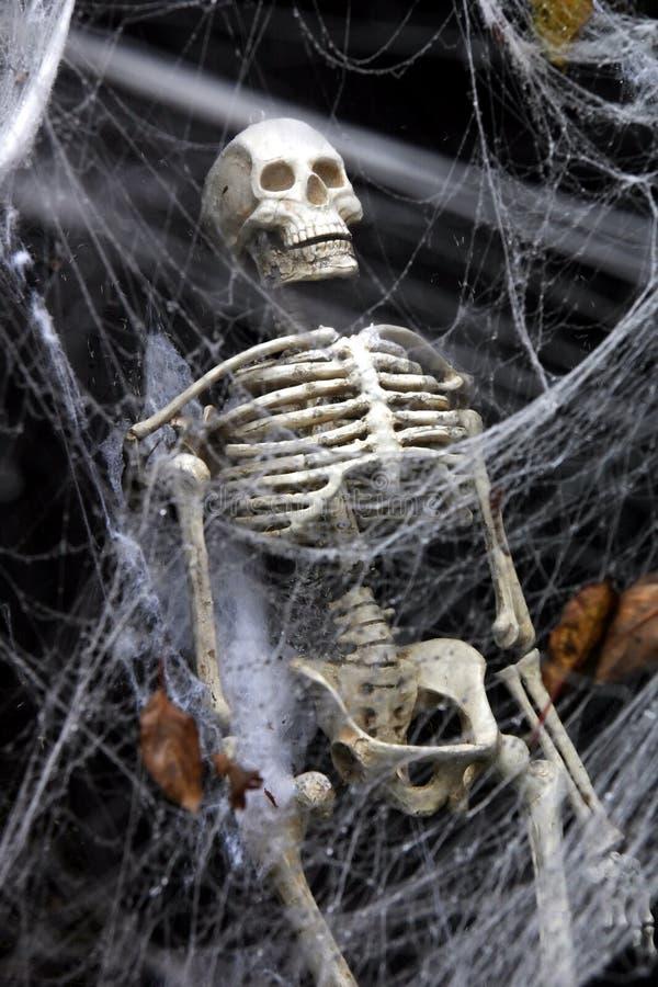 Skeleton In The Web Stock Photos