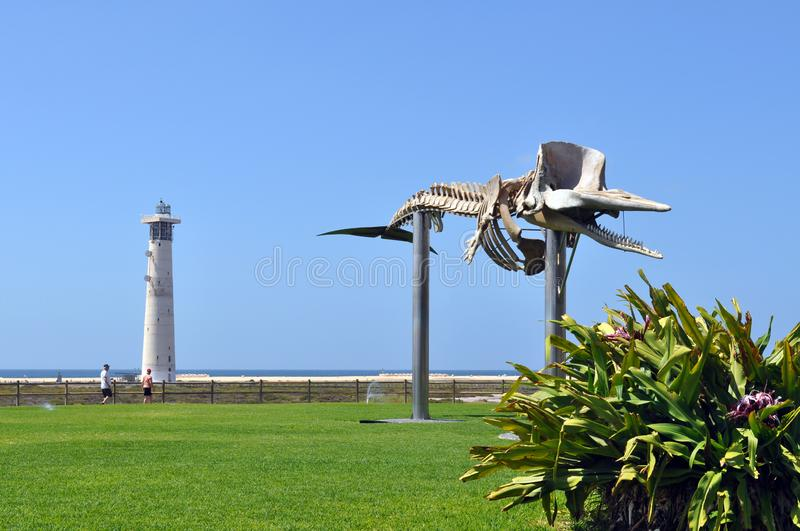 The skeleton of the whale and the lighthouse in Morro Jable stock photo