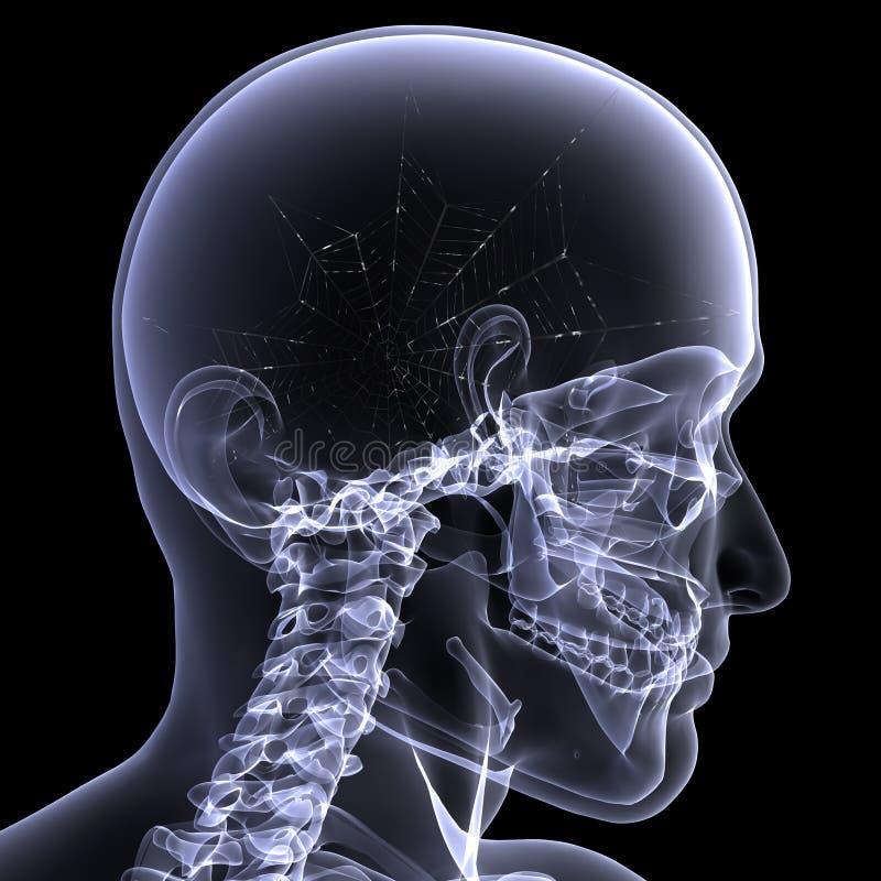 Download Skeleton X-Ray - Webs Royalty Free Stock Image - Image: 7902936