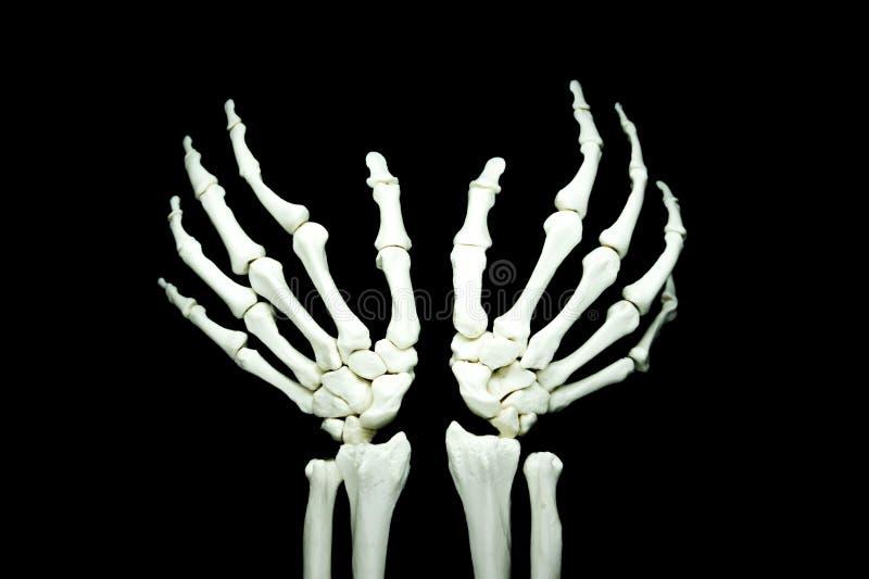 Skeletone photo stock