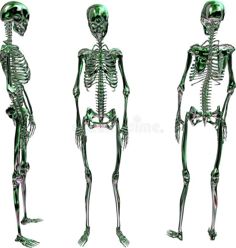 Download Skeletons stock illustration. Image of isolated, illustrations - 3820894