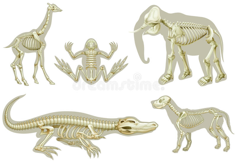 Skeletons of animals vector illustration