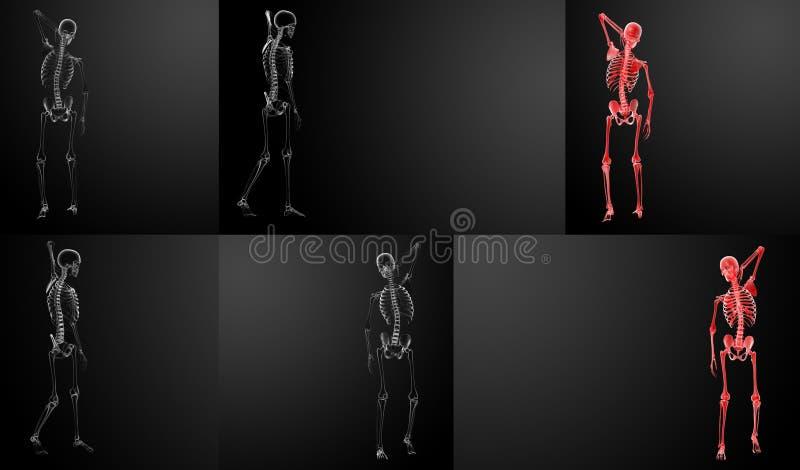 Skeletröntgenstralen stock illustratie