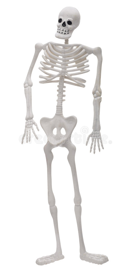 skelett fotografering för bildbyråer