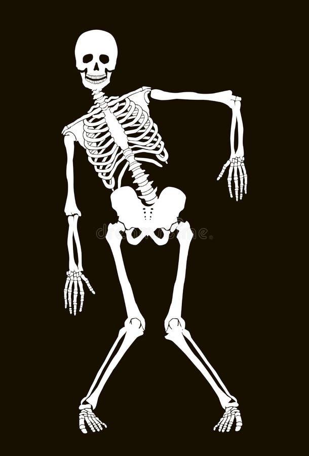 Skelett vektor abbildung