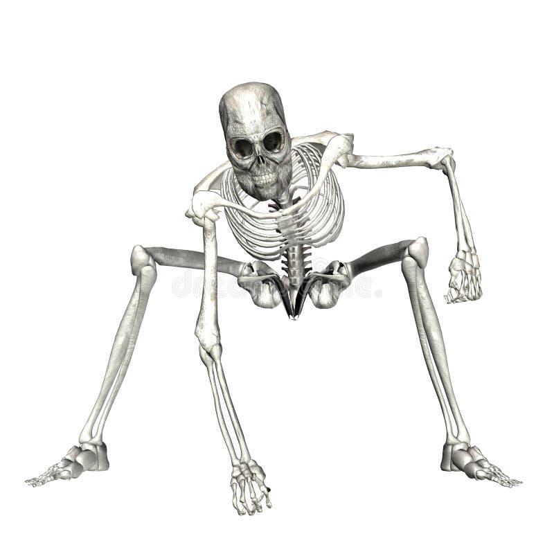 skelett 5 royaltyfri illustrationer