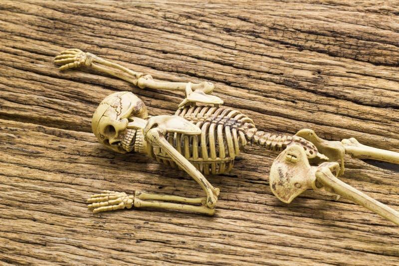 Skelett auf altem hölzernem Hintergrund lizenzfreie stockfotos