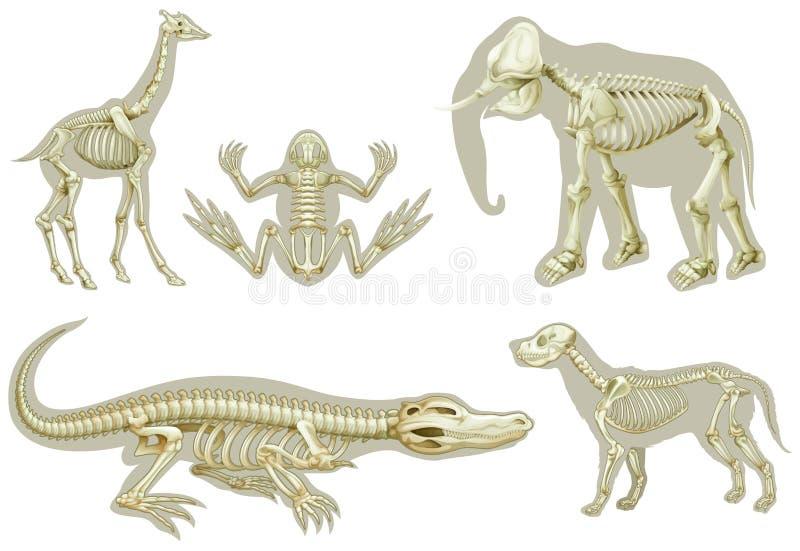 Skelett av djur vektor illustrationer