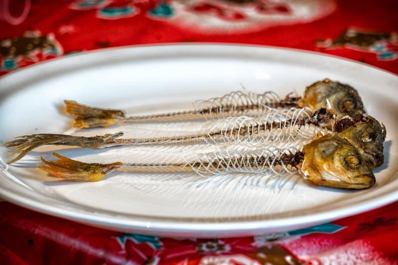Skelett av fisken på en platta fotografering för bildbyråer