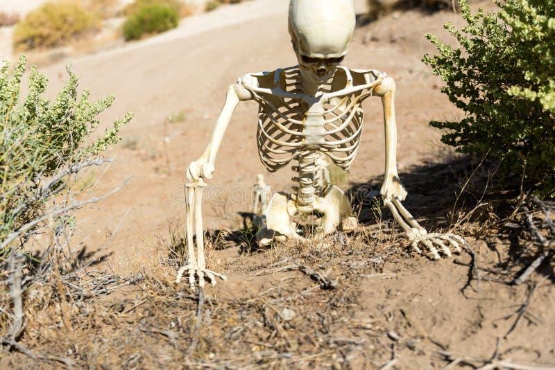 Skelett, das in die Wüste sucht nach Wasser kriecht lizenzfreie stockbilder