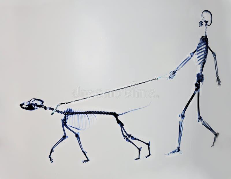 Skelett des Hundes und des Mannes stockfoto