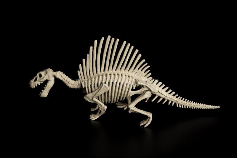 Skelett för spinosaurus för sidosikt på svart bakgrund royaltyfri bild