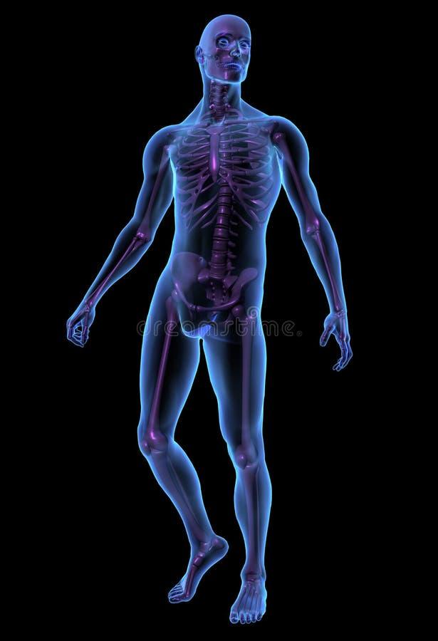 skelett x för stråle för mänsklig illustration för huvuddel male royaltyfri illustrationer