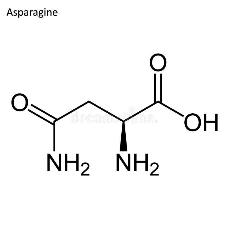 Skelett- formel av asparaginen vektor illustrationer