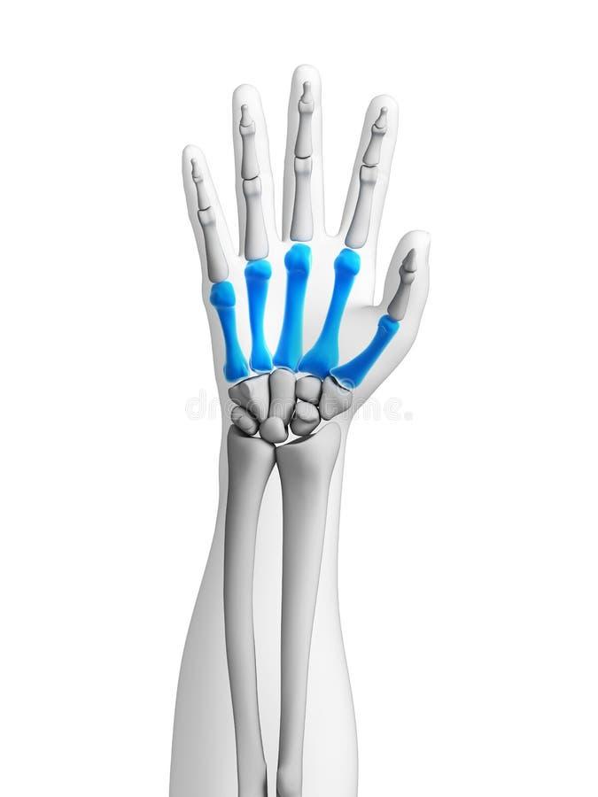 Skelett- hand vektor illustrationer