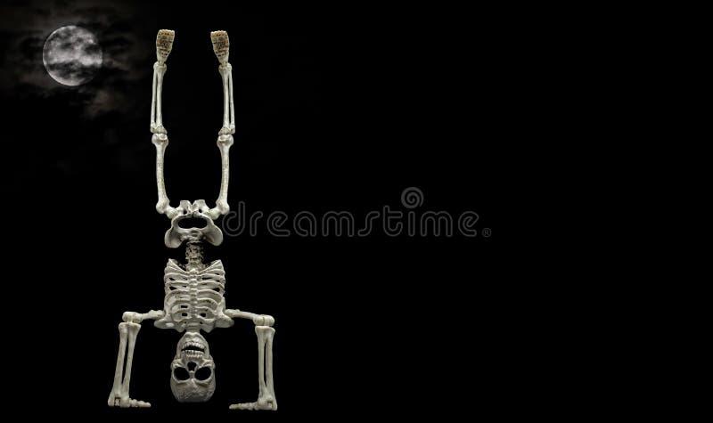 Skelett- handställning royaltyfria foton
