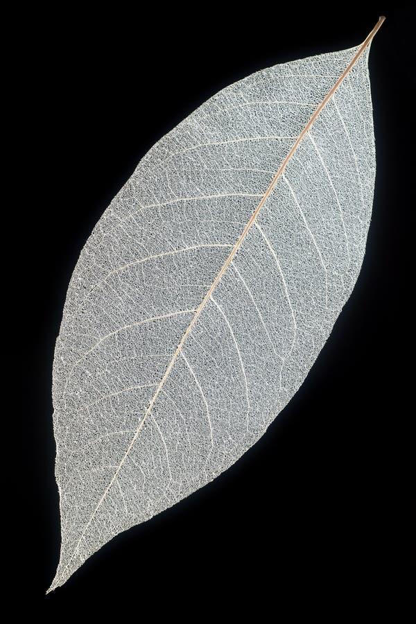 Skelett- leaf fotografering för bildbyråer