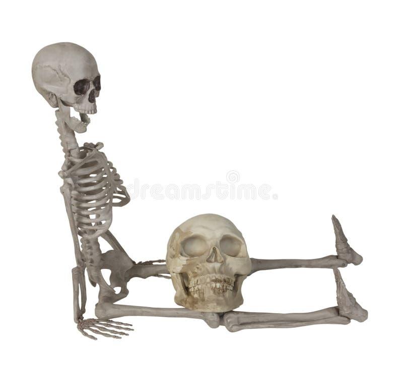 Skelett med en skalle på varven royaltyfria bilder