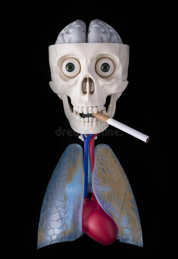 Skelett, menschlicher Schädel in den Fängen einer Zigarette, schmutzige Lunge, Herz und Gehirn auf einem schwarzen Hintergrund lizenzfreie stockfotografie