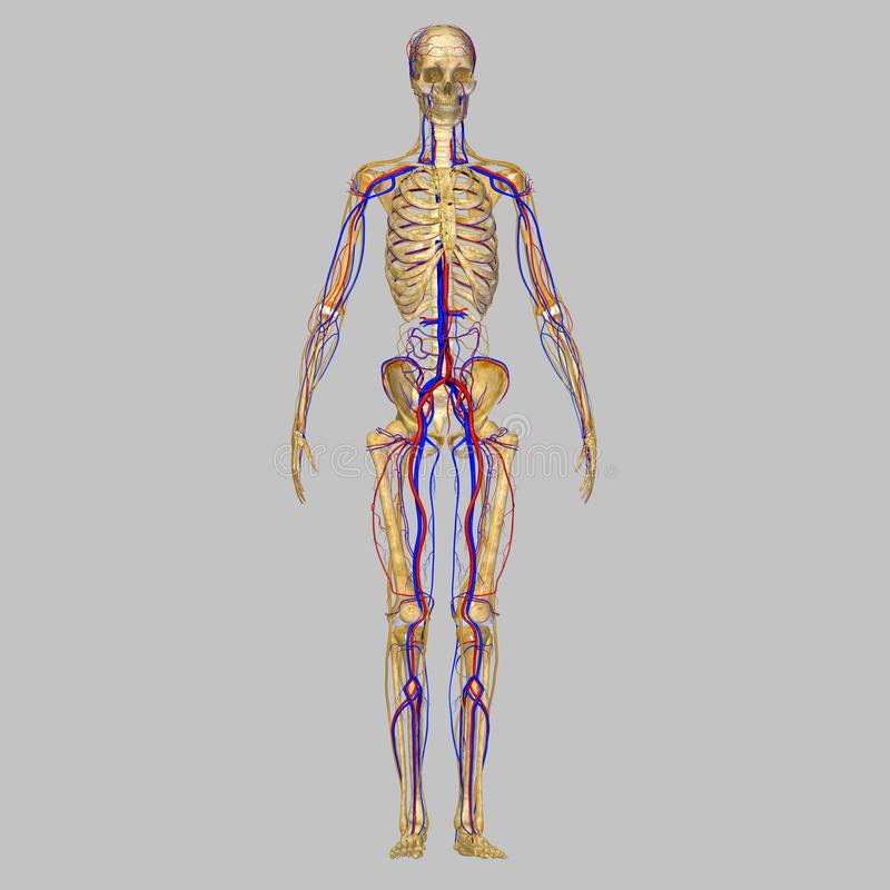 Ausgezeichnet Nervensystem Bild Fotos - Menschliche Anatomie Bilder ...