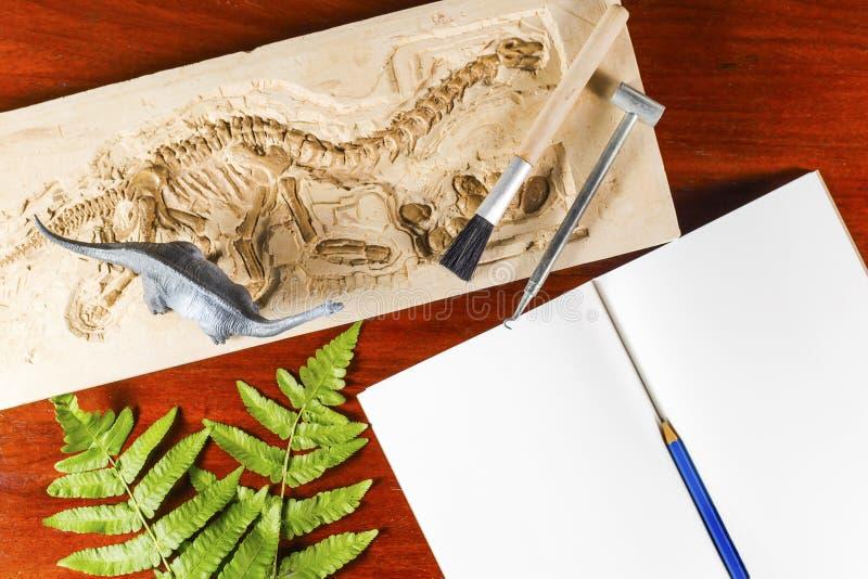 Skelett- och arkeologiska hjälpmedel fotografering för bildbyråer