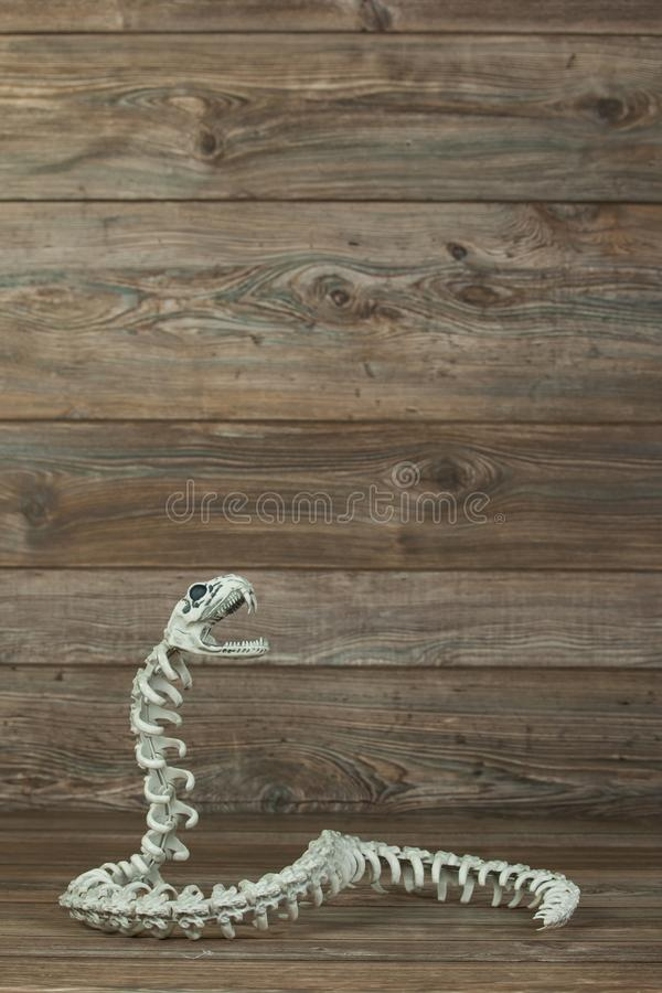 Skelett- orm med kopieringsrum royaltyfria bilder