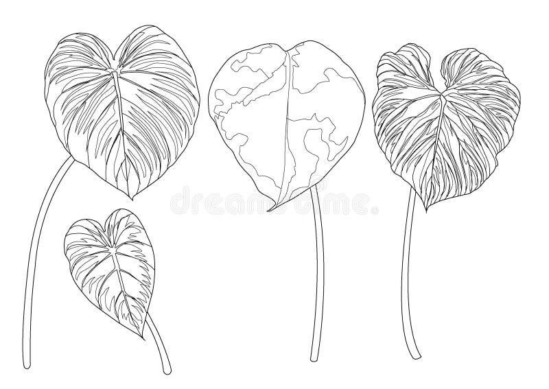Skelett- sidor fodrade design på den vita bakgrundsillustrationen stock illustrationer