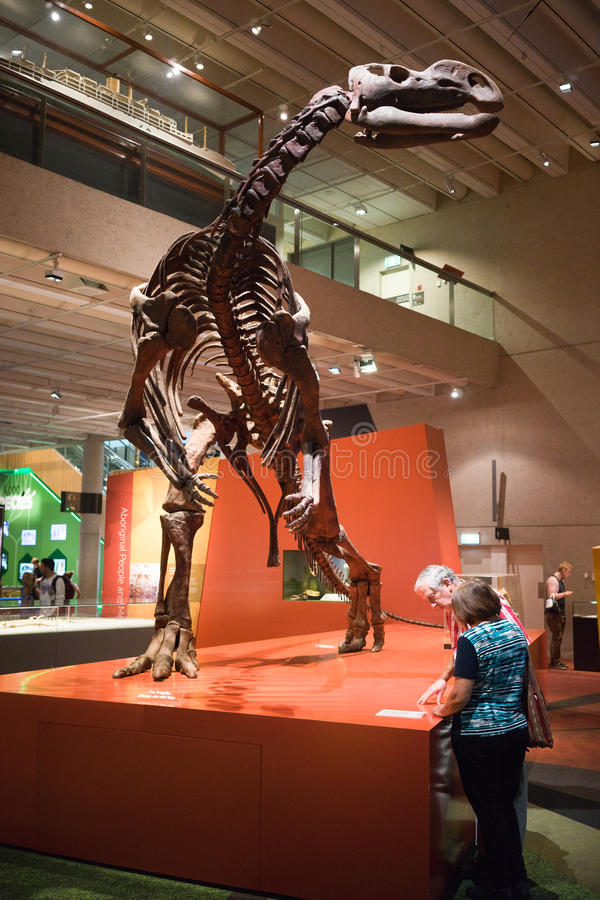 Skelett- skärm för Queensland museumdinosaurie royaltyfria foton
