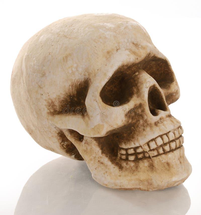 skelett- skalle royaltyfria bilder