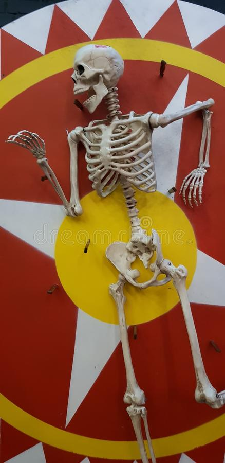 skelett stockfotos