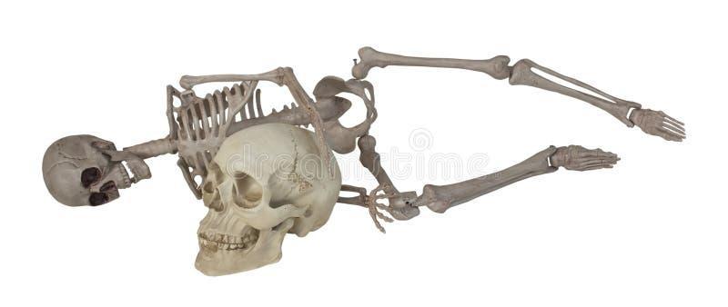 Skelett som lägger med skallen arkivbilder