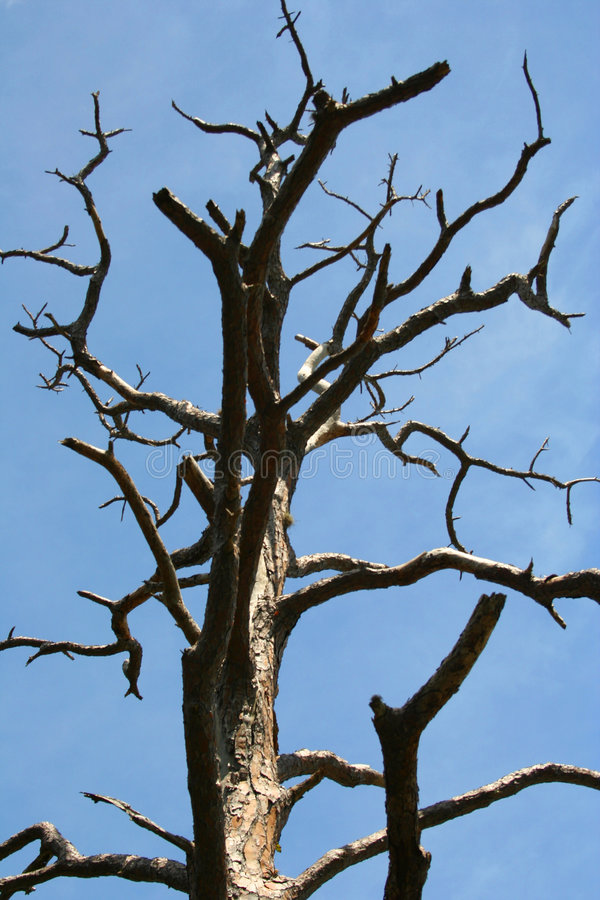 skelett- tree royaltyfri foto