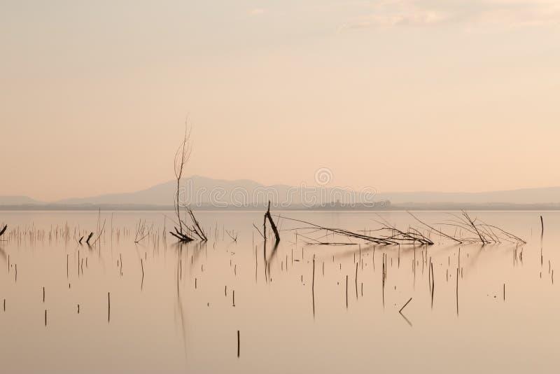 Skelettartige Bäume und Niederlassungen tadellos noch im Wasser bei Sonnenuntergang, stockfotografie