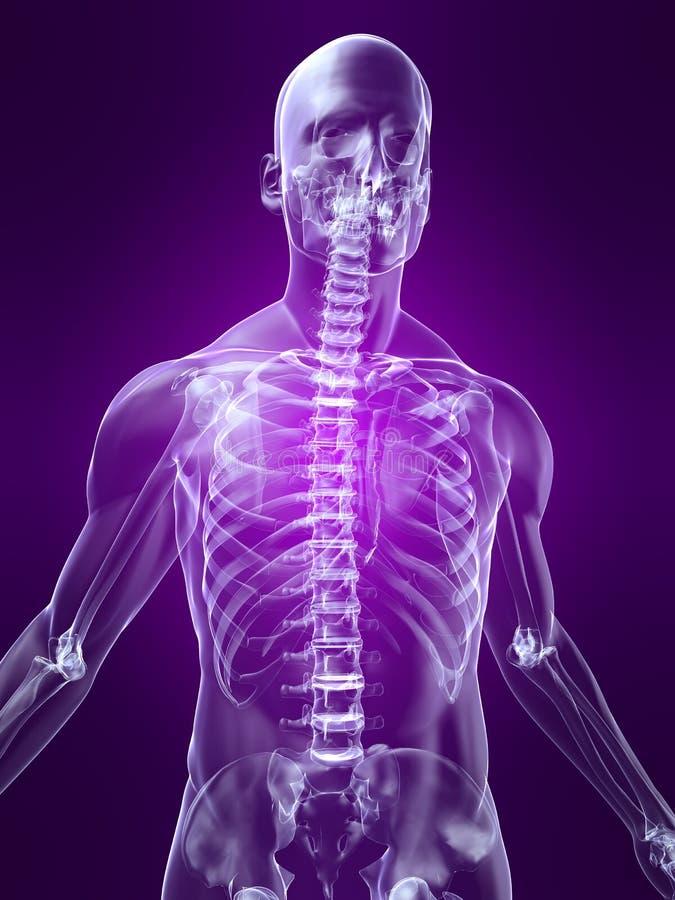 Skelettartiger Torso stock abbildung