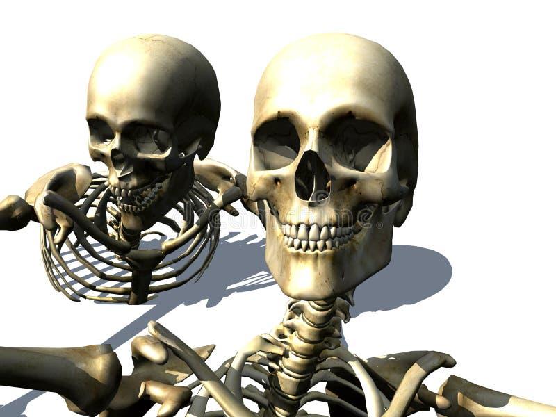 Skelette 10 lizenzfreie abbildung