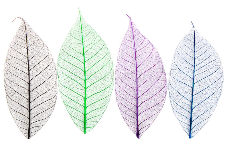 Skelette der Blätter lizenzfreie stockbilder