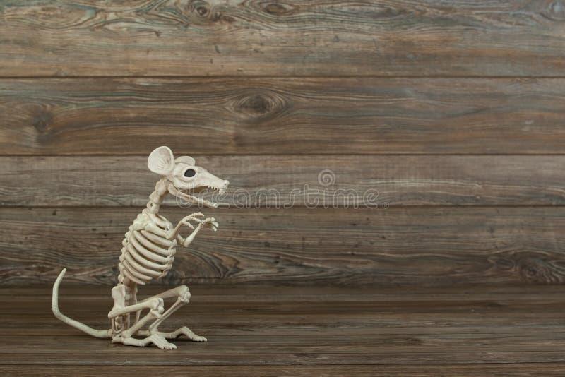 Skelettet tjaller på wood bakgrund royaltyfri foto