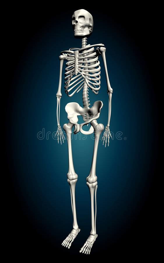 Skelton Royalty Free Stock Images