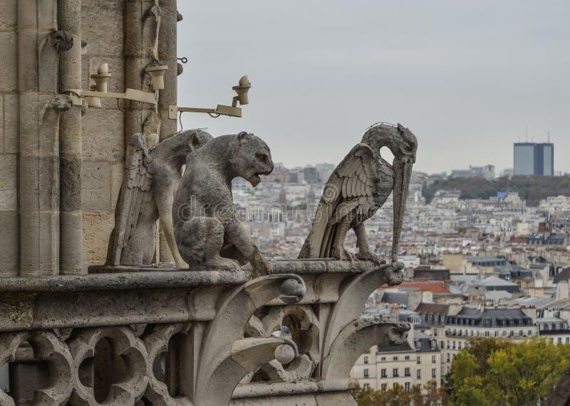 Skenbildvattenkastare av Notre Dame de Paris royaltyfri foto