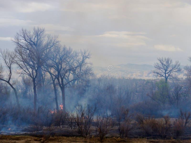 Skeppareöbrand i Colorado arkivbild