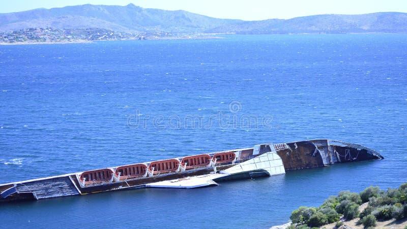 Skeppsbrottfiskmås royaltyfri foto